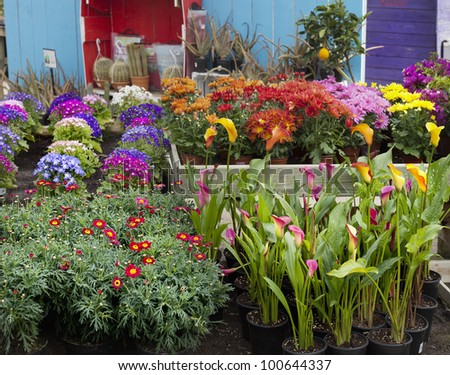 Garden center with many flowers on display for sale in early springtime