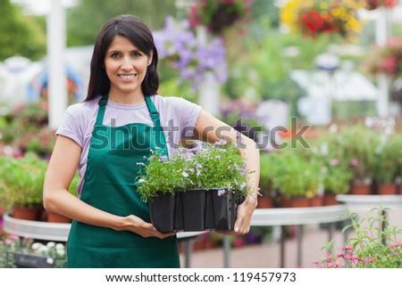 Garden center worker carrying box of flowers in garden center