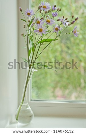 Garden chrysanthemum in glassed vases