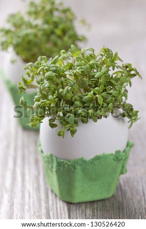 Garden cress in an eggshell