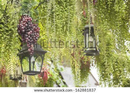 garden decoration, hanging lighting lantern among green wine plant and grape