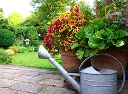 Garden decoration. very cozy picture with iron watering can and wooden ladder. Nice gardening conept of a landscaped rural garden. pure natural.
