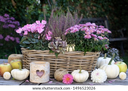 garden decoration with autumn flowers in pink and white pumpkins