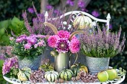 garden decoration with bouquet of pink dahlias,  autumn flowers and pumpkins