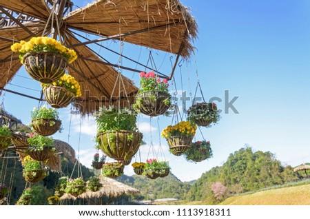 garden designs with hanging flower pot in high season or winter season at Doi Ang Khang,Thailand
