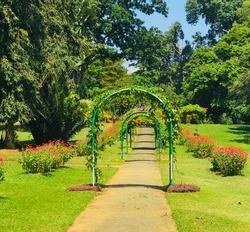 garden,flowers,beautiful place,nature photo ,landscape ,beautiful srilanka,happy place