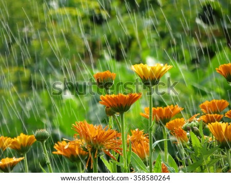 Garden flowers in rain. Summer flower background. Natural backgrounds