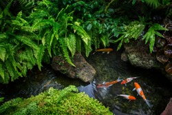Garden forest ferns,Philodendron,Ixora chinensis,Begonia,moss,stone and green other leaves with large orange carp (Koi fish) swimming in a stream river flowing after the rain.