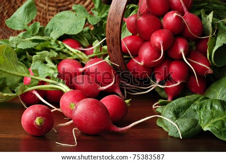 Garden fresh radishes and spinach leaves spilling from wicker basket onto wood table. Macro with shallow dof.