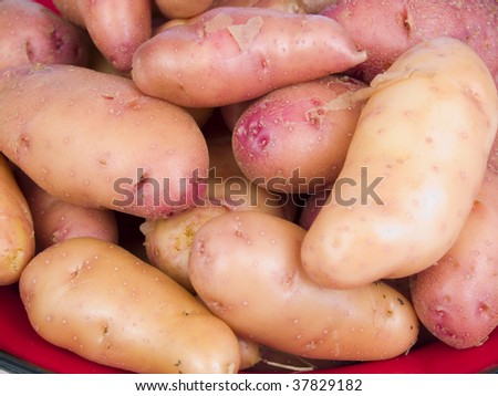 Garden fresh rose fingerling potatoes on a red plate