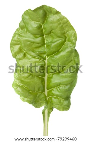 Garden fresh Swiss chard (silverbeet) leaf on white with clipping path