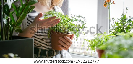 Garden,gardening home. Girl replanting green pasture in home garden.agriculture,indoor garden,room with plants banner Potted green plants at home, home jungle,Garden room gardening, Plant room,