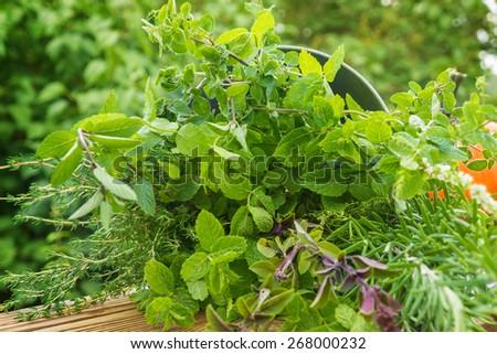 Garden herbs, medicinal plants