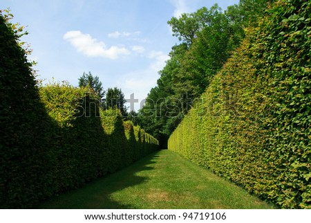 Garden in France.