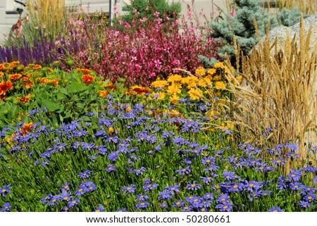 garden marguerite - stock photo