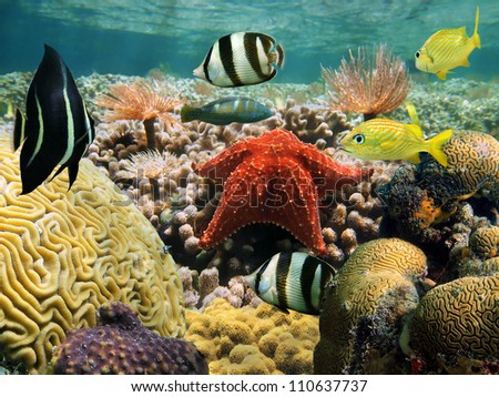 Garden of corals under water surface with a starfish and colorful tropical fish