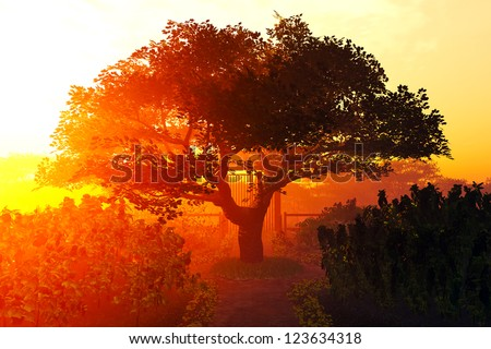 Garden of Herbs and Summer Cherry Tree Sunset Sunrise 3D render