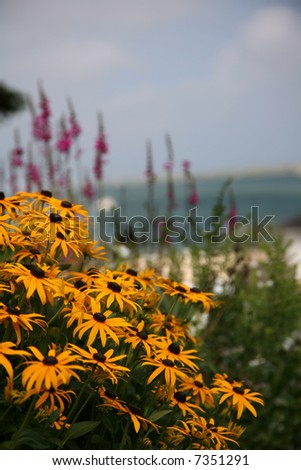 Garden on Cape Cod with the ocean in the background