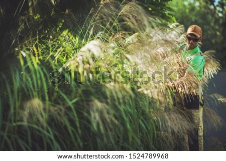 Garden Ornamental Grasses Maintenance. Professional Caucasian Gardener Taking Care of Plants.