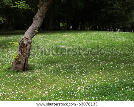 garden park, lawn and tree