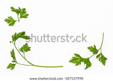 Shutterstock garden parsley leaves on white background
