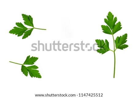 garden parsley stalks with leaves on white background with copy space