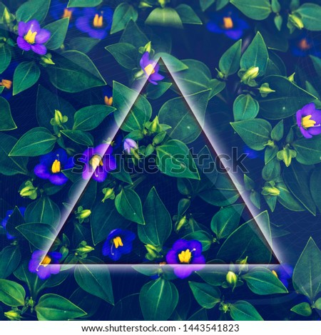 Garden photography with a triangle. A flower and leafs background for copy