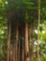 Garden Plants and Trees shoot on morning. Gaussian Blur