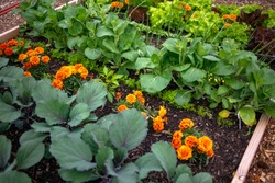 Garden plot with raised bed