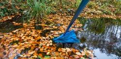 garden pond in autumn cleaning