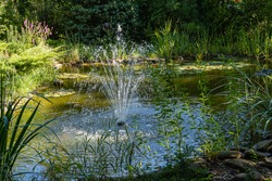 Garden pond with cascading fountain in evergreen garden landscape. Water lilies or lotuses in water. Evergreens and aquatic plants along shore. Close-up. Atmosphere of calm relaxation and love.