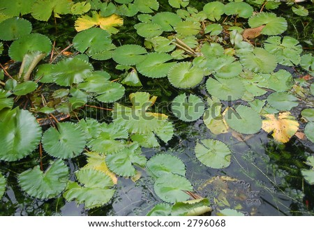 Garden pond with ornamental water plants stock photo for Ornamental pond plants