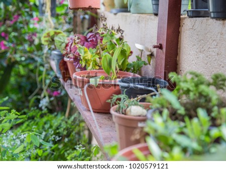 garden pots sitting on wooden table growing green fruits and vegetables. colorful herbs and soil inside flower pot with organic seeds and key for healthy lifestyle. Fresh and delicious natural    #1020579121