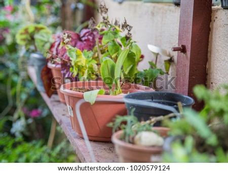 garden pots sitting on wooden table growing green fruits and vegetables. colorful herbs and soil inside flower pot with organic seeds and key for healthy lifestyle. Fresh and delicious natural    #1020579124