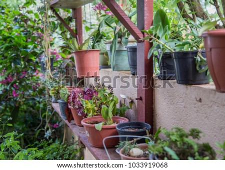 garden pots sitting on wooden table growing green fruits and vegetables. colorful herbs and soil inside flower pot with organic seeds and key for healthy lifestyle. Fresh and delicious natural #1033919068