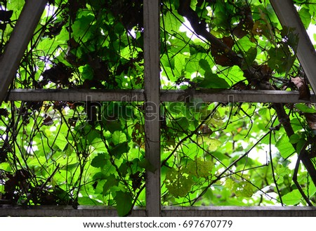Garden railing and green leaves #697670779