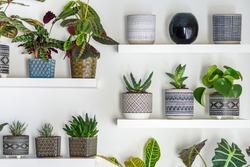 Garden room. Succulent Plants In Geometric Ornamented Art Deco Style Flower Pots. Home Gardening.