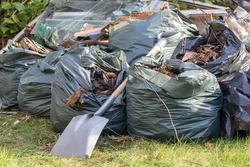 Garden rubbish in refuse sacks stored during covid19 coronavirus lockdown isolation. Bin bags mounting up on lawn after green waste collection suspension. Spring outdoor tidy up with spade.