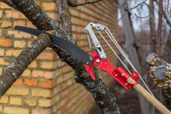 Garden saw for cutting branches of cherry bush overgrown with lichen. Pruning of fruit trees with lopper. Spring or autumn work in garden. Gardening concept