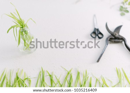 Garden scissors on a white background branches of plants #1035216409