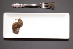 Garden snail Helix aspersa Snails top view on a white porcelain rectangular plate with a silver engraved fork on a dark background. The concept of utensils for snails.