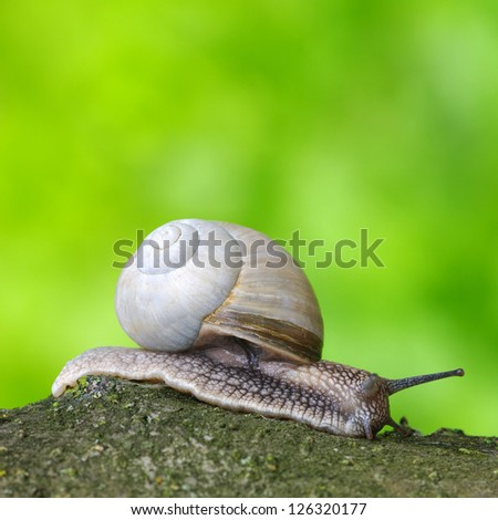 Garden snail in front of a green background