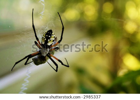 Garden spider spinning its food - stock photo