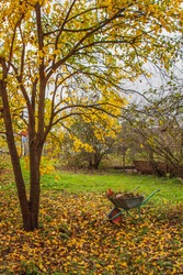 Garden steel wheelbarrow staying under colorful autumn tree with yellow leaves. Concept preparing garden for winter season