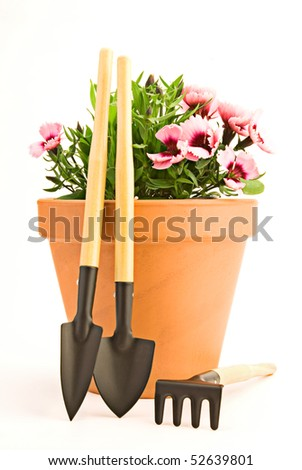 Garden tools and carnation in clay flower pot isolated on white background