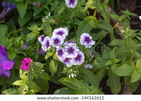 Garden varieties of colorful flowers, beautiful nature admirable. #544162612
