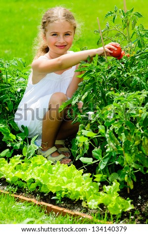 Garden, vegetable, gardening - lovely girl picking ripe tomatoes