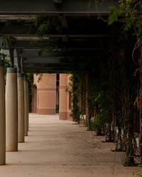 garden walkway at a public park in the Woodlands, TX