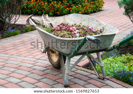 Garden wheelbarrow with garden rubbish
