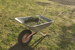 garden wheelbarrow with mown grass inside against the lawn